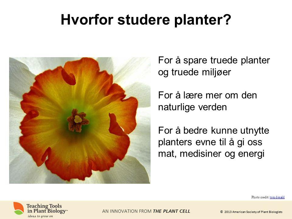 © 2013 American Society of Plant Biologists Hvorfor studere planter.