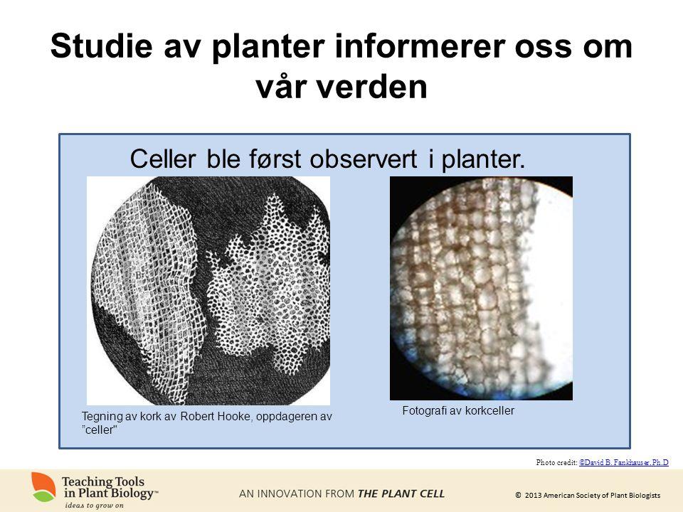 © 2013 American Society of Plant Biologists Studie av planter informerer oss om vår verden Tegning av kork av Robert Hooke, oppdageren av celler Celler ble først observert i planter.