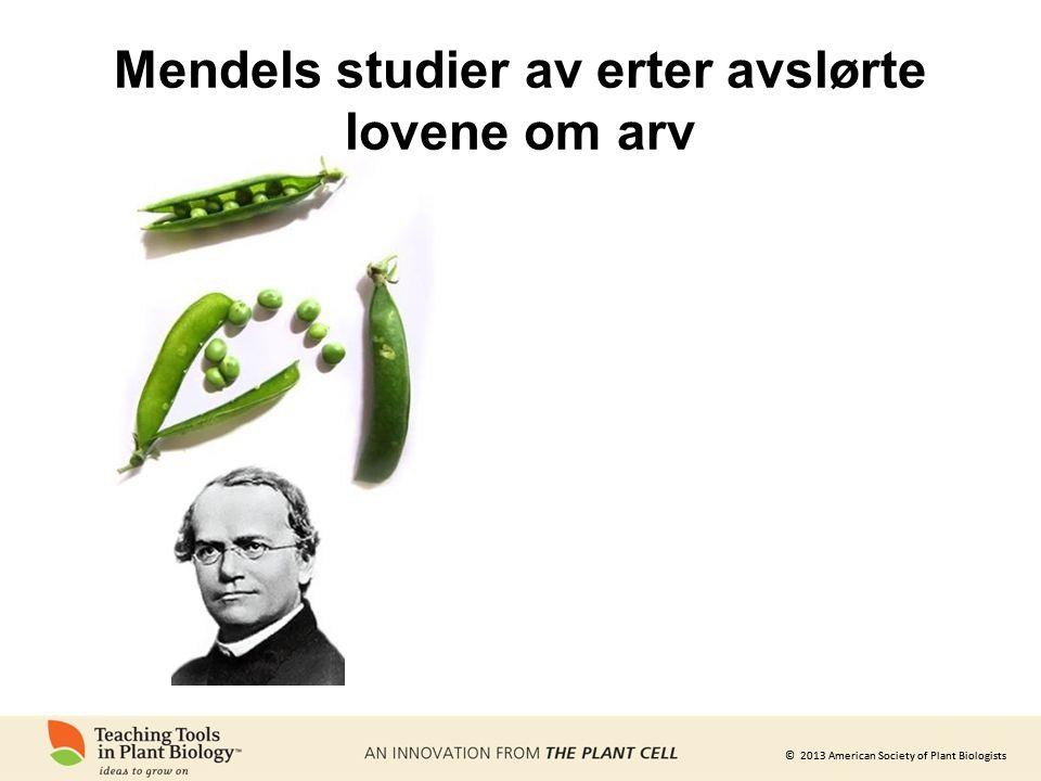 © 2013 American Society of Plant Biologists Mendels studier av erter avslørte lovene om arv