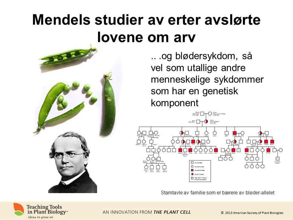 © 2013 American Society of Plant Biologists Mendels studier av erter avslørte lovene om arv...og blødersykdom, så vel som utallige andre menneskelige