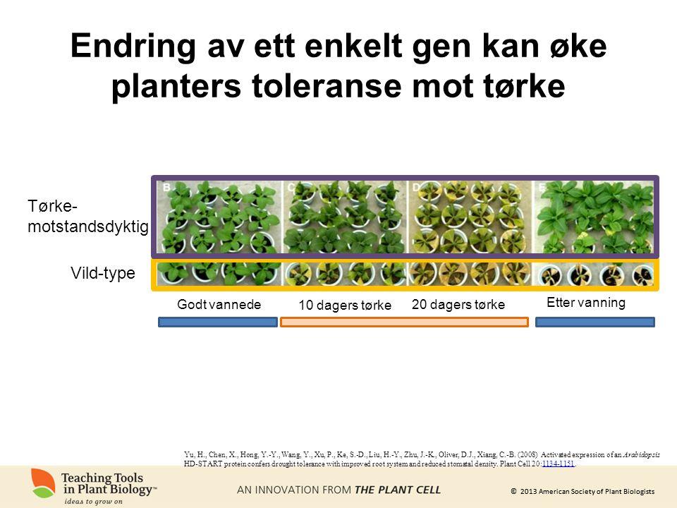 © 2013 American Society of Plant Biologists Endring av ett enkelt gen kan øke planters toleranse mot tørke Yu, H., Chen, X., Hong, Y.-Y., Wang, Y., Xu