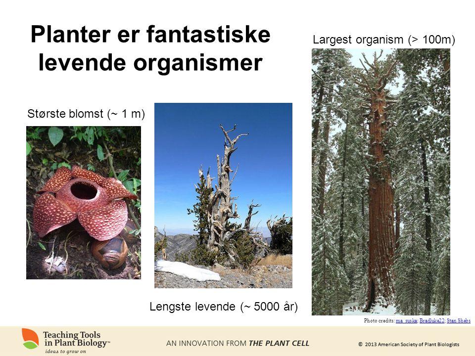 © 2013 American Society of Plant Biologists Største blomst (~ 1 m) Lengste levende (~ 5000 år) Photo credits: ma_suska; Bradluke22; Stan Shebsma_suska