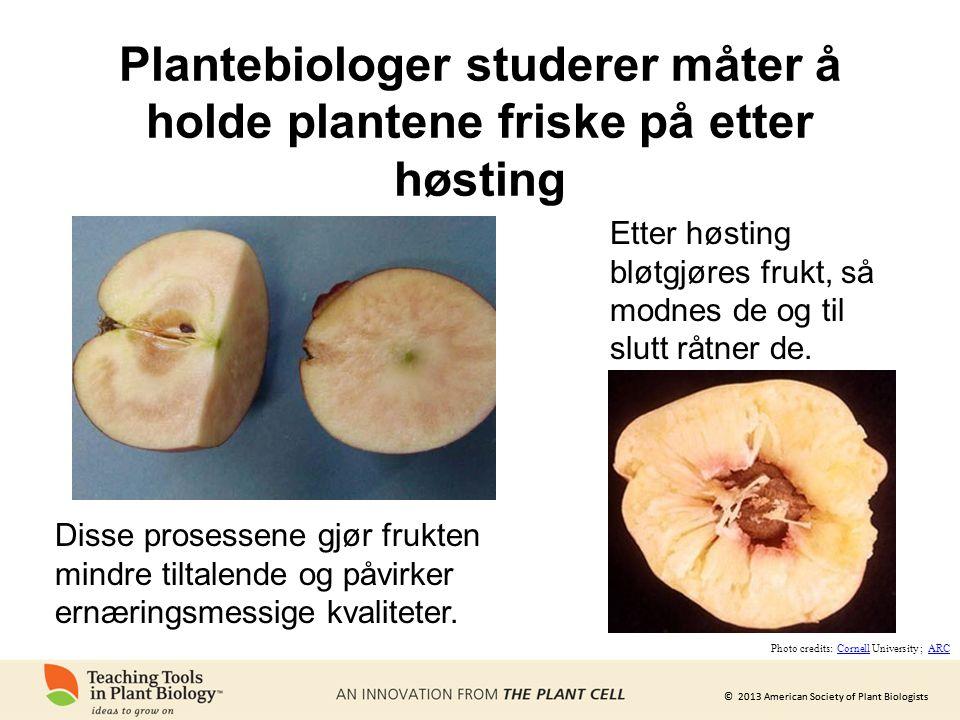 © 2013 American Society of Plant Biologists Plantebiologer studerer måter å holde plantene friske på etter høsting Etter høsting bløtgjøres frukt, så modnes de og til slutt råtner de.