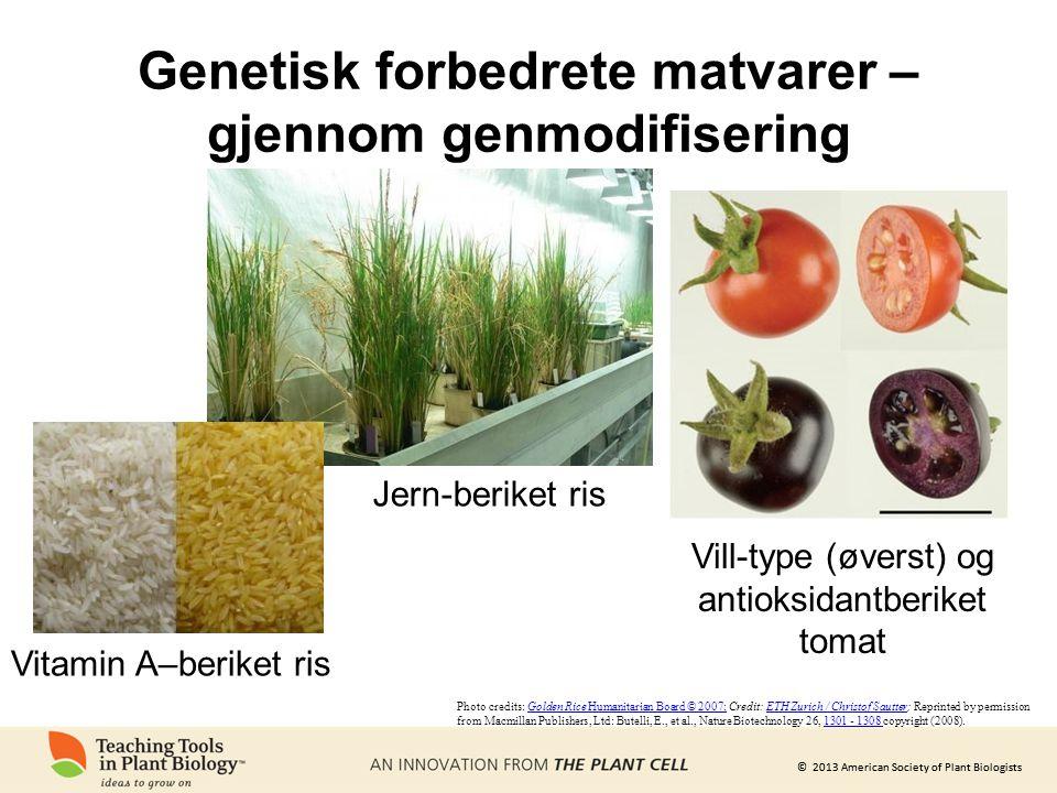 © 2013 American Society of Plant Biologists Genetisk forbedrete matvarer – gjennom genmodifisering Jern-beriket ris Vill-type (øverst) og antioksidant