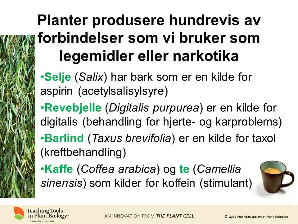 © 2013 American Society of Plant Biologists Planter produsere hundrevis av forbindelser som vi bruker som legemidler eller narkotika •Selje (Salix) har bark som er en kilde for aspirin (acetylsalisylsyre) •Revebjelle (Digitalis purpurea) er en kilde for digitalis (behandling for hjerte- og karproblems) •Barlind (Taxus brevifolia) er en kilde for taxol (kreftbehandling) •Kaffe (Coffea arabica) og te (Camellia sinensis) som kilder for koffein (stimulant)