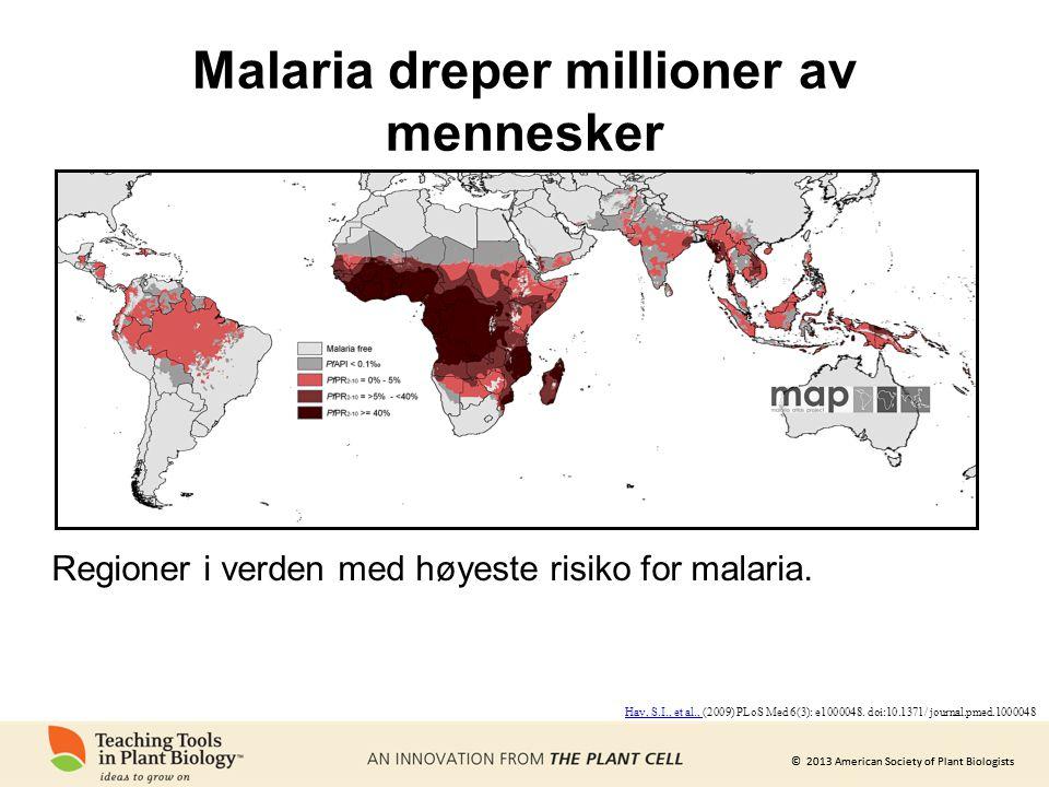 © 2013 American Society of Plant Biologists Malaria dreper millioner av mennesker Regioner i verden med høyeste risiko for malaria.