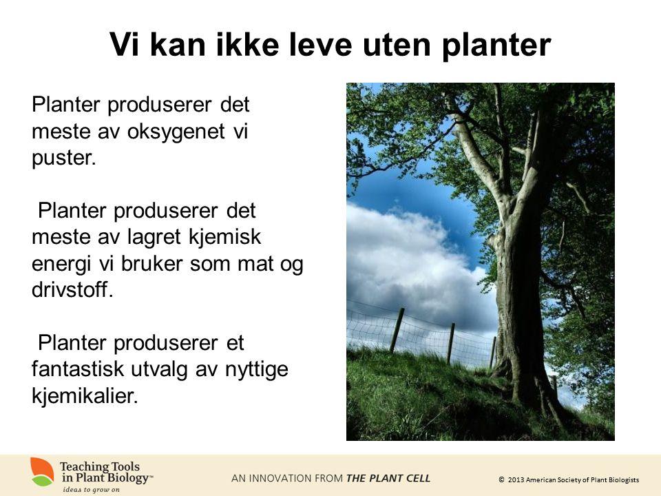 © 2013 American Society of Plant Biologists Vi kan ikke leve uten planter Planter produserer det meste av oksygenet vi puster. Planter produserer det
