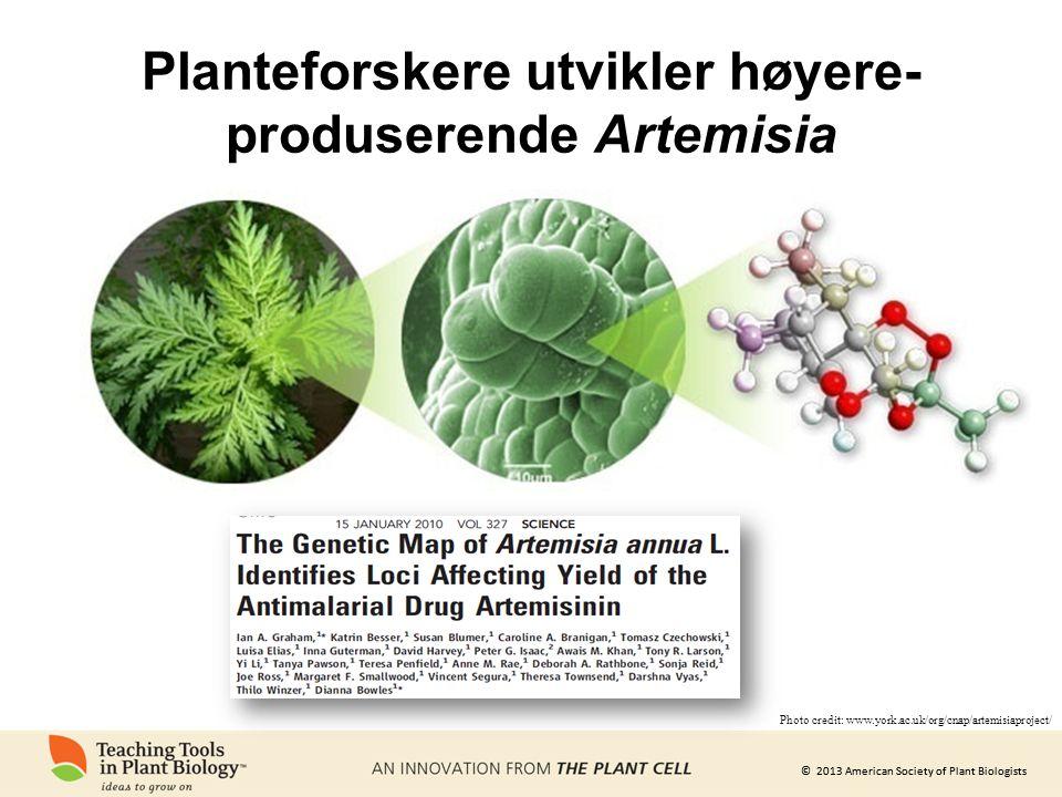 © 2013 American Society of Plant Biologists Planteforskere utvikler høyere- produserende Artemisia Photo credit: www.york.ac.uk/org/cnap/artemisiaproject/