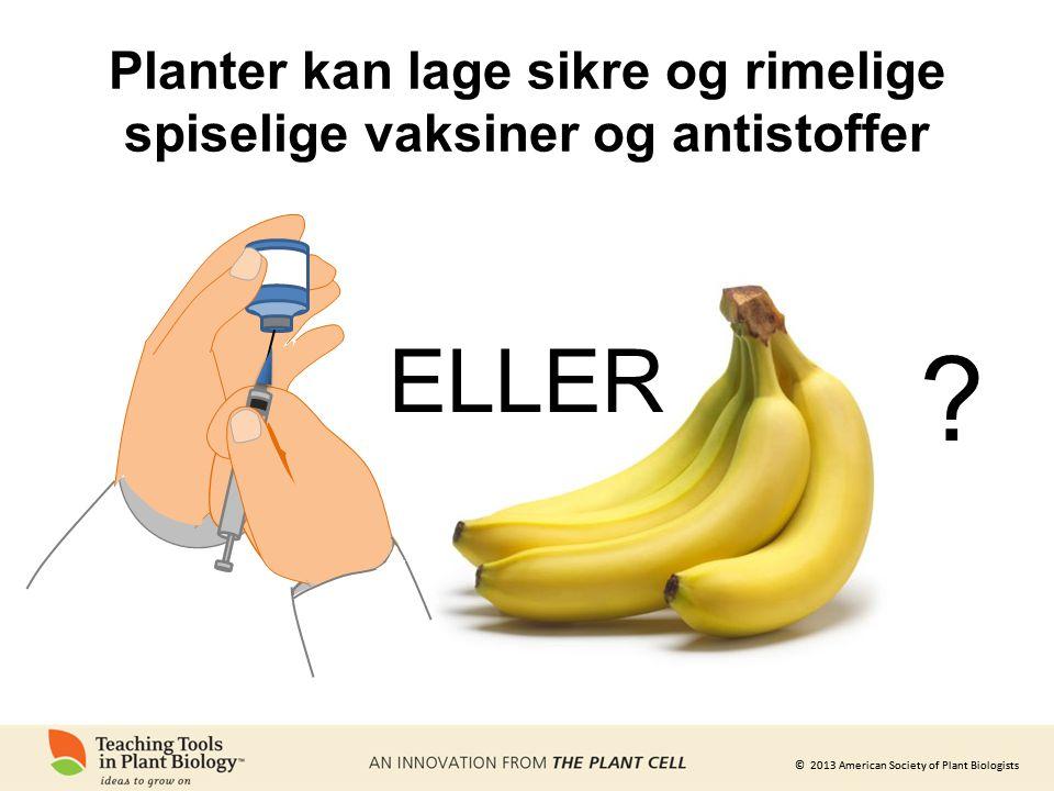 © 2013 American Society of Plant Biologists Planter kan lage sikre og rimelige spiselige vaksiner og antistoffer ELLER ?