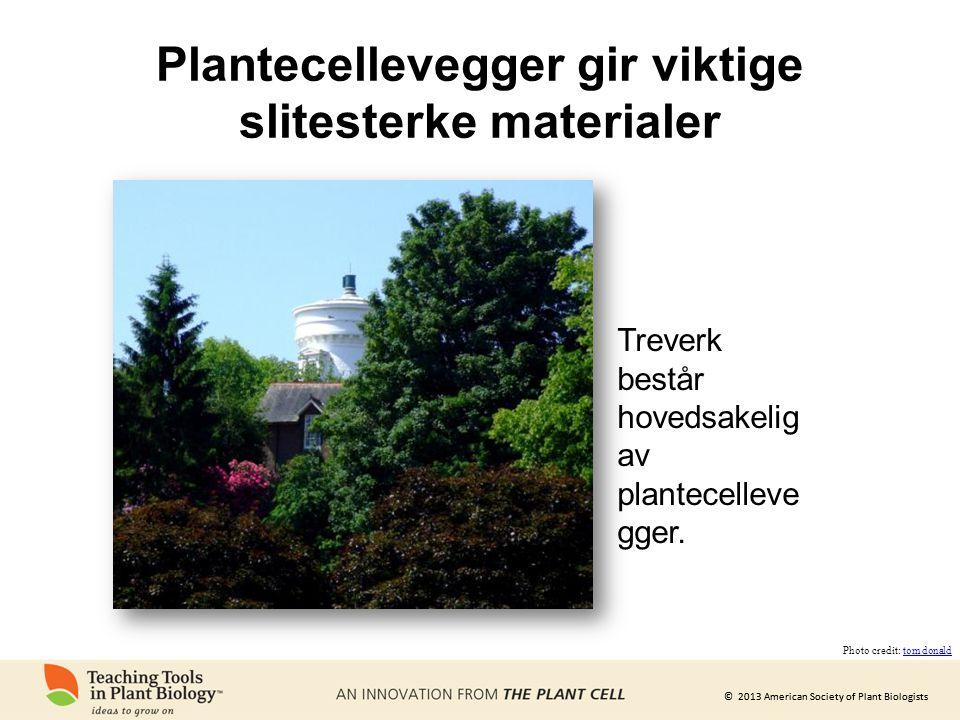© 2013 American Society of Plant Biologists Plantecellevegger gir viktige slitesterke materialer Treverk består hovedsakelig av plantecelleve gger.