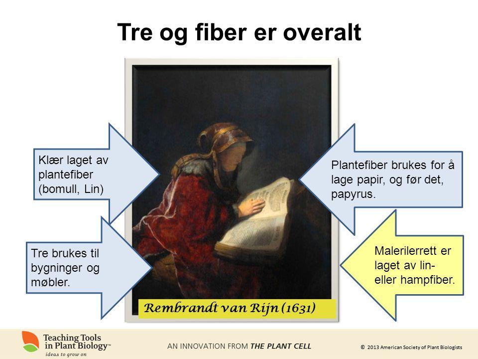 © 2013 American Society of Plant Biologists Tre og fiber er overalt Rembrandt van Rijn (1631) Klær laget av plantefiber (bomull, Lin) Plantefiber brukes for å lage papir, og før det, papyrus.
