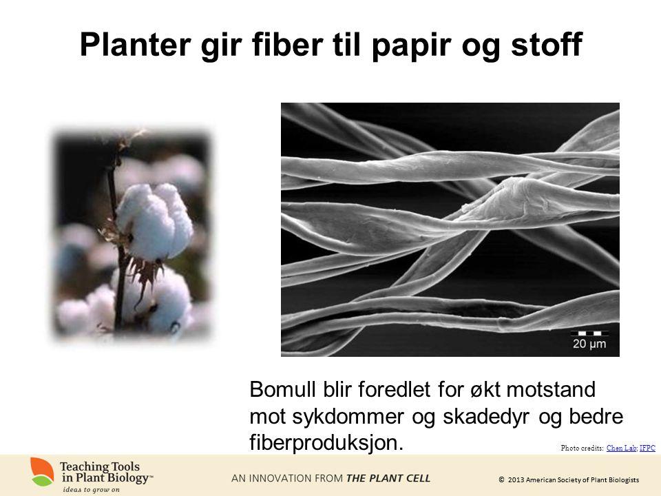 © 2013 American Society of Plant Biologists Planter gir fiber til papir og stoff Bomull blir foredlet for økt motstand mot sykdommer og skadedyr og bedre fiberproduksjon.