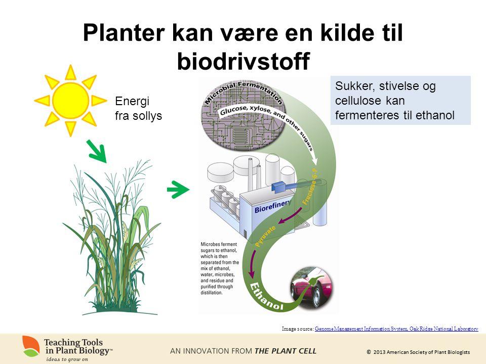 © 2013 American Society of Plant Biologists Planter kan være en kilde til biodrivstoff Energi fra sollys Image source: Genome Management Information S