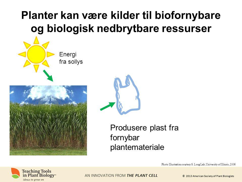 © 2013 American Society of Plant Biologists Planter kan være kilder til biofornybare og biologisk nedbrytbare ressurser Energi fra sollys Produsere plast fra fornybar plantemateriale Photo Illustration courtesy S.