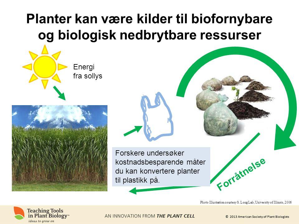 © 2013 American Society of Plant Biologists Energi fra sollys Forråtnelse Planter kan være kilder til biofornybare og biologisk nedbrytbare ressurser Forskere undersøker kostnadsbesparende måter du kan konvertere planter til plastikk på.