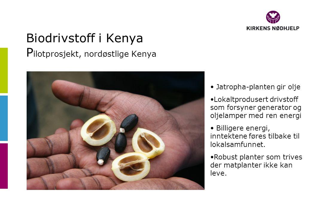 Biodrivstoff i Kenya P ilotprosjekt, nordøstlige Kenya • Jatropha-planten gir olje •Lokaltprodusert drivstoff som forsyner generator og oljelamper med ren energi • Billigere energi, inntektene føres tilbake til lokalsamfunnet.