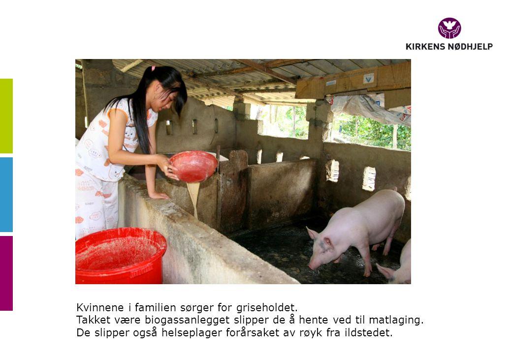 Kvinnene i familien sørger for griseholdet. Takket være biogassanlegget slipper de å hente ved til matlaging. De slipper også helseplager forårsaket a