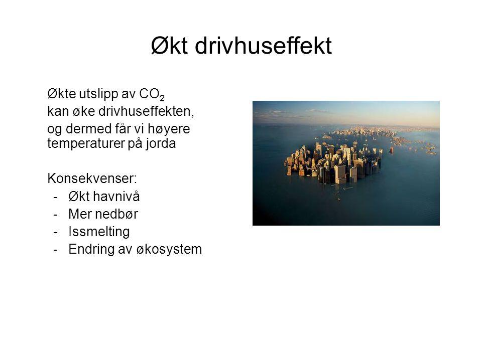 Økt drivhuseffekt Økte utslipp av CO 2 kan øke drivhuseffekten, og dermed får vi høyere temperaturer på jorda Konsekvenser: -Økt havnivå -Mer nedbør -