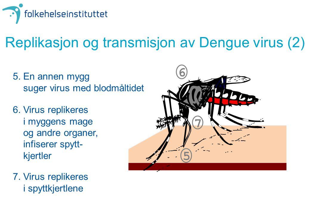 Replikasjon og transmisjon av Dengue virus (2) 5. En annen mygg suger virus med blodmåltidet 6. Virus replikeres i myggens mage og andre organer, infi