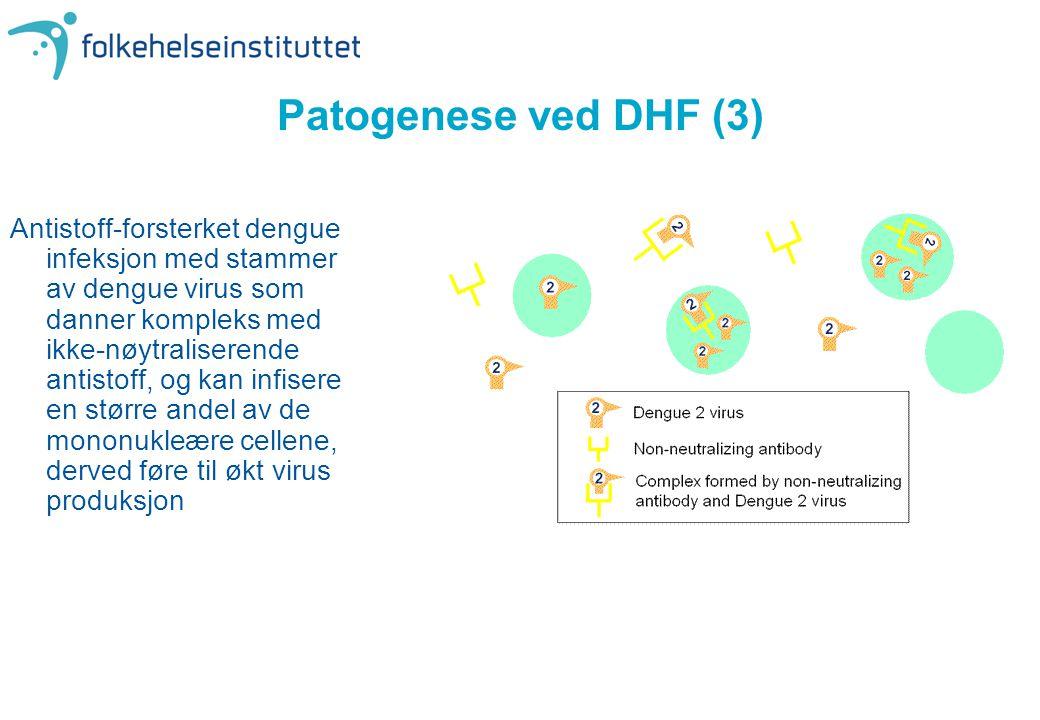 Patogenese ved DHF (3) Antistoff-forsterket dengue infeksjon med stammer av dengue virus som danner kompleks med ikke-nøytraliserende antistoff, og ka
