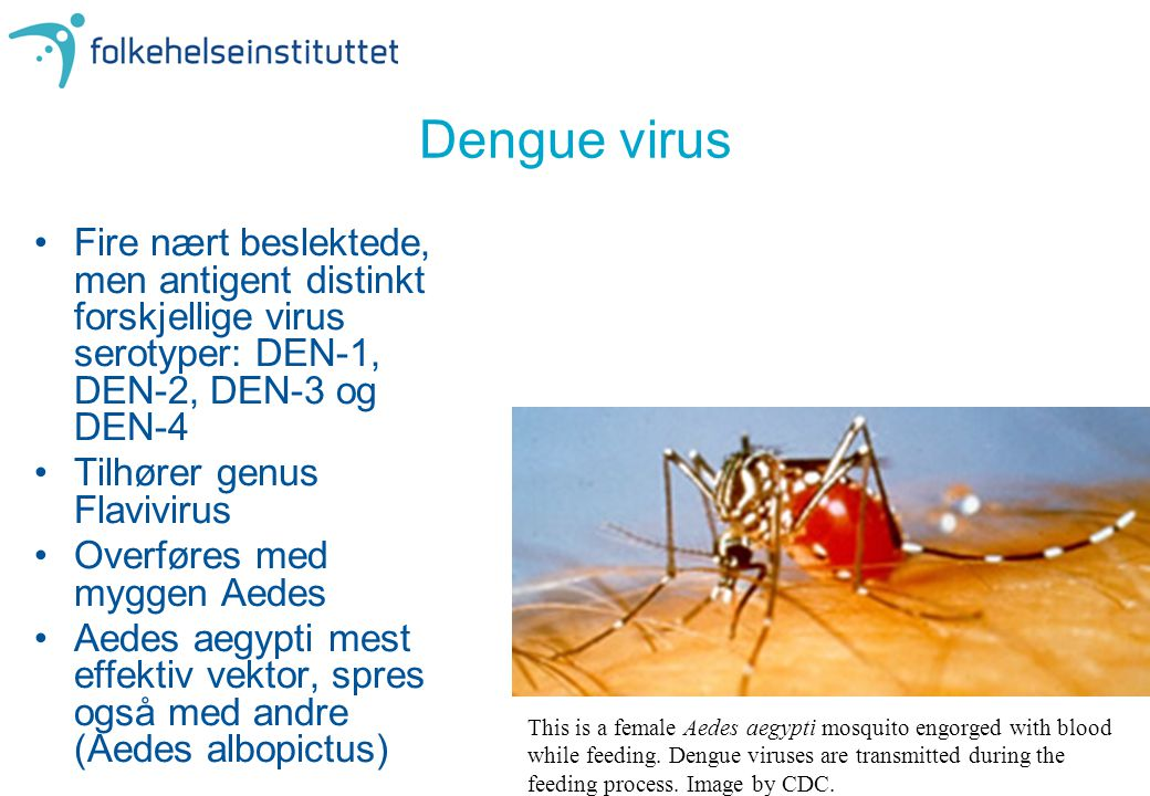 Dengue virus •Fire nært beslektede, men antigent distinkt forskjellige virus serotyper: DEN-1, DEN-2, DEN-3 og DEN-4 •Tilhører genus Flavivirus •Overf