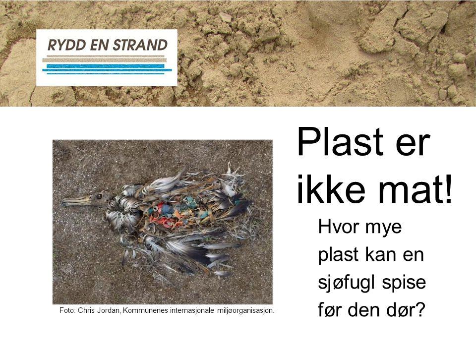 Foto: Chris Jordan, Kommunenes internasjonale miljøorganisasjon. Hvor mye plast kan en sjøfugl spise før den dør? Plast er ikke mat!