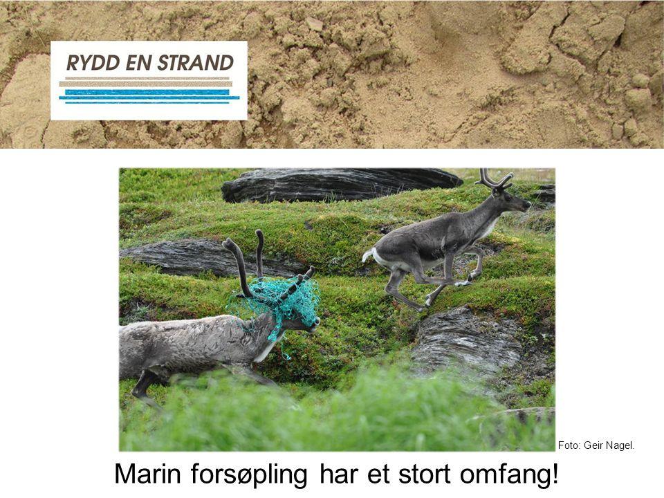 Foto: Geir Nagel. Marin forsøpling har et stort omfang!