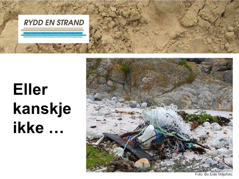 Bli med på Strandryddedagen! Foto: Bo Eide Miljøfoto.