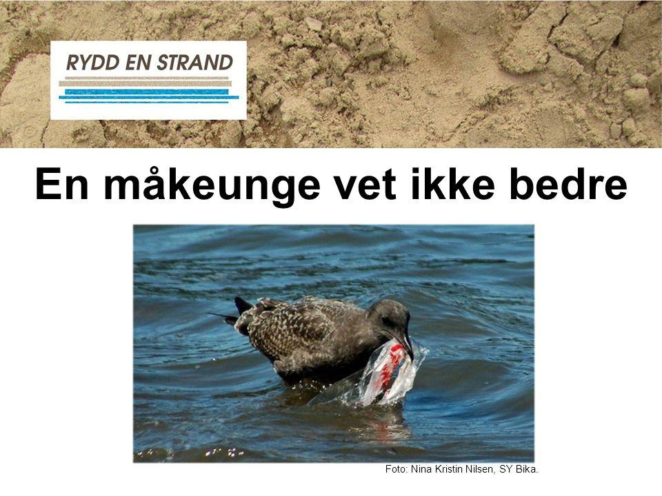 En måkeunge vet ikke bedre Foto: Nina Kristin Nilsen, SY Bika.