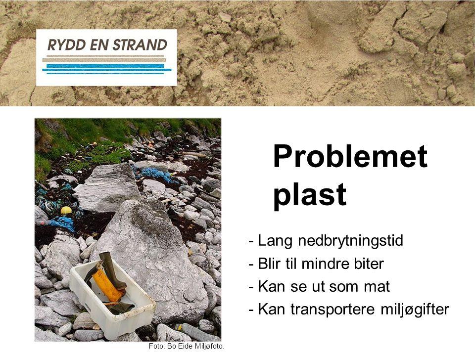 - Lang nedbrytningstid - Blir til mindre biter - Kan se ut som mat - Kan transportere miljøgifter Problemet plast Foto: Bo Eide Miljøfoto.