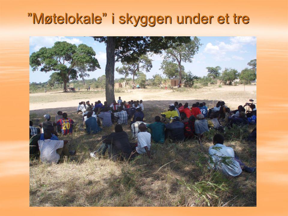 Møtelokale i skyggen under et tre