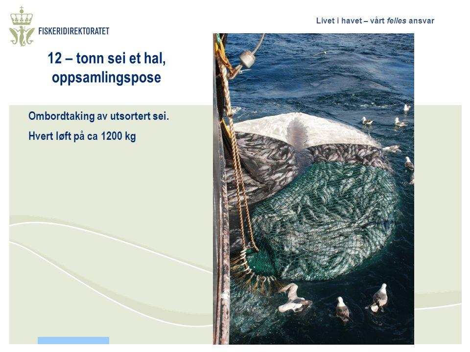 Livet i havet – vårt felles ansvar Ren kolmule fangst. Seien er i all hovedsak sortert ut