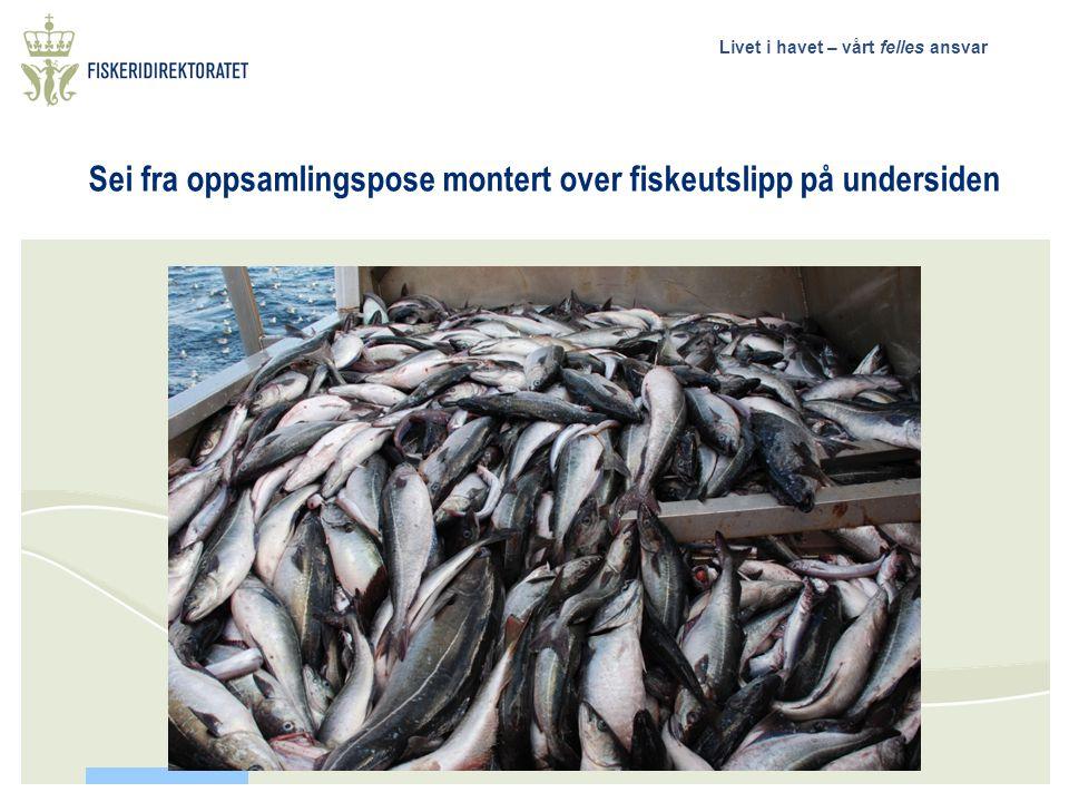 Livet i havet – vårt felles ansvar 12 – tonn sei et hal, oppsamlingspose Ombordtaking av utsortert sei. Hvert løft på ca 1200 kg