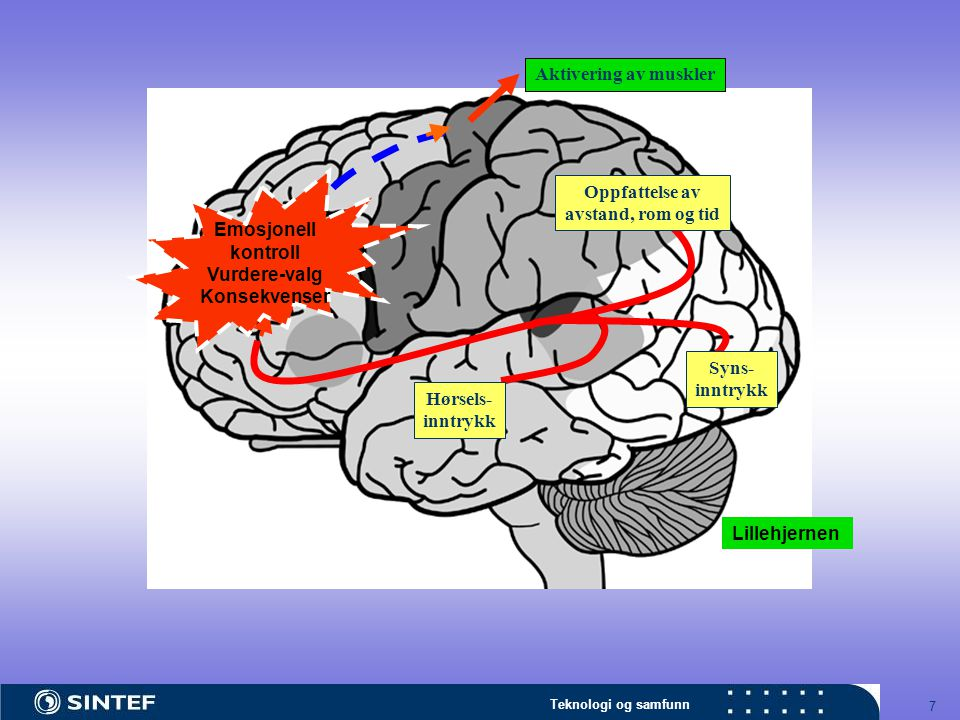 7 Hørsels- inntrykk Syns- inntrykk Oppfattelse av avstand, rom og tid Aktivering av muskler Emosjonell kontroll Vurdere-valg Konsekvenser Lillehjernen