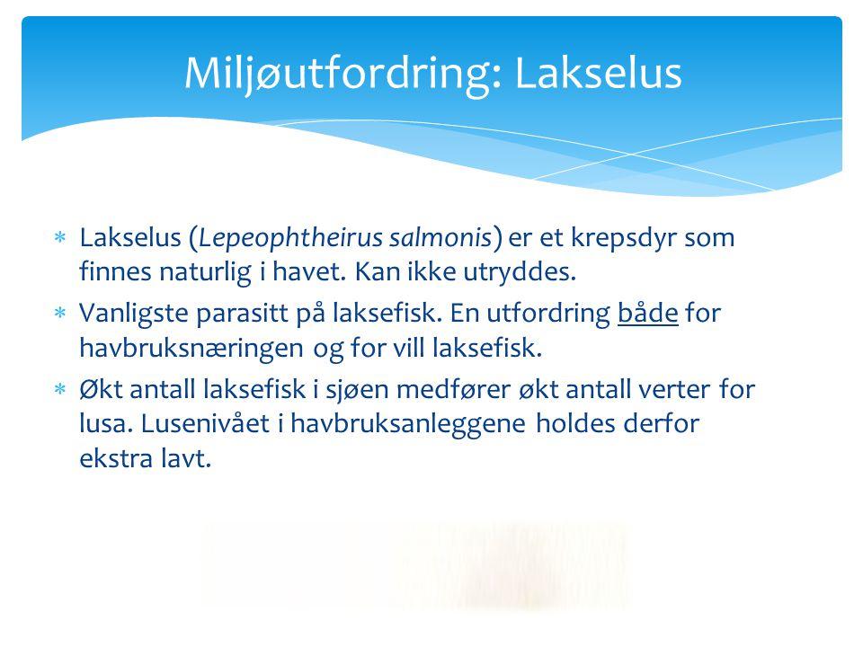 Miljøutfordring: Lakselus  Lakselus (Lepeophtheirus salmonis) er et krepsdyr som finnes naturlig i havet. Kan ikke utryddes.  Vanligste parasitt på