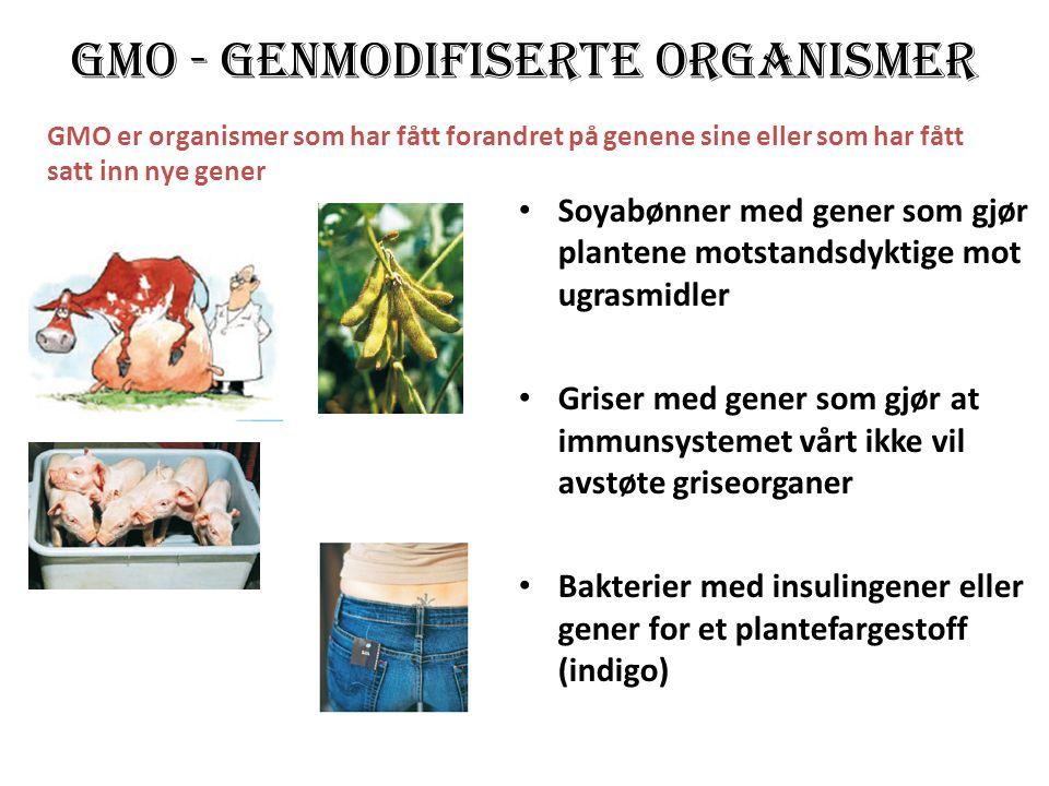 GMO - genmodifiserte organismer • Soyabønner med gener som gjør plantene motstandsdyktige mot ugrasmidler • Griser med gener som gjør at immunsystemet