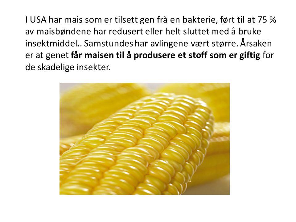 I USA har mais som er tilsett gen frå en bakterie, ført til at 75 % av maisbøndene har redusert eller helt sluttet med å bruke insektmiddel.. Samstund