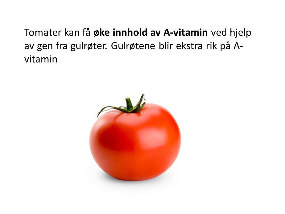Tomater kan få øke innhold av A-vitamin ved hjelp av gen fra gulrøter. Gulrøtene blir ekstra rik på A- vitamin
