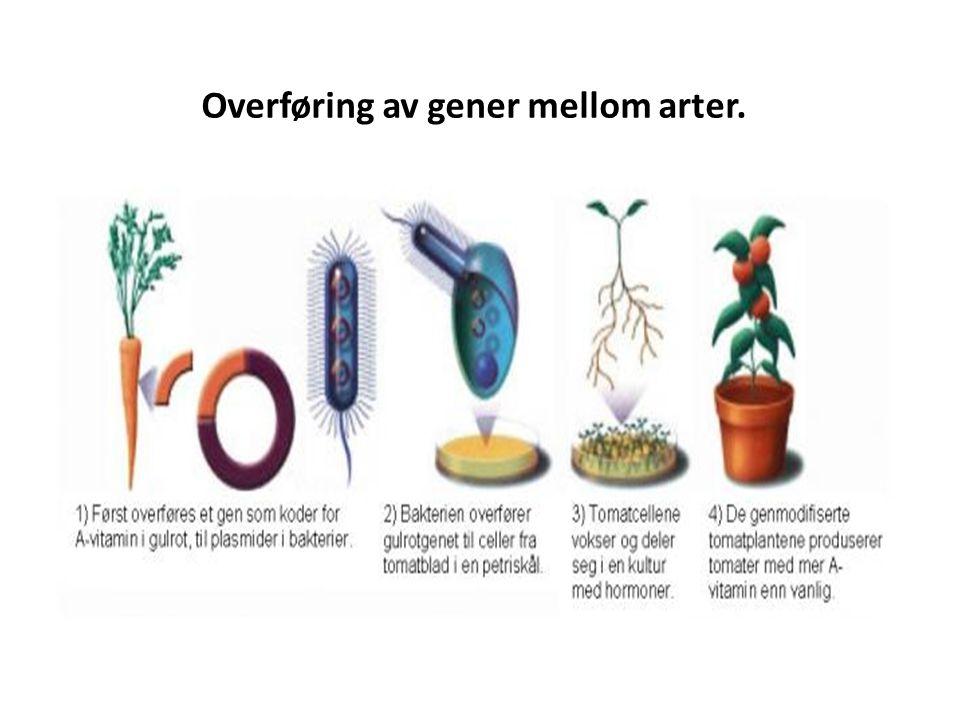 Overføring av gener mellom arter.