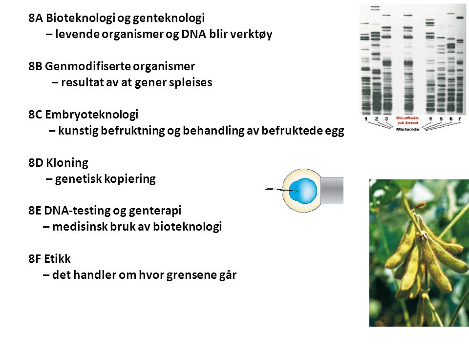 8A Bioteknologi og genteknologi – levende organismer og DNA blir verktøy 8B Genmodifiserte organismer – resultat av at gener spleises 8C Embryoteknolo