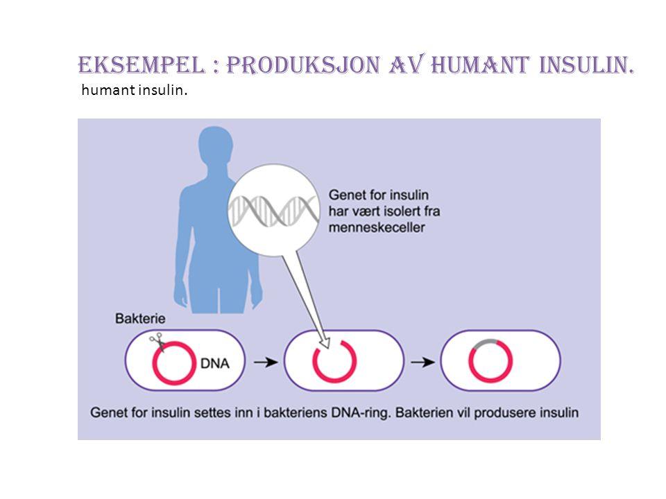 Eksempel : Produksjon av humant insulin. humant insulin.