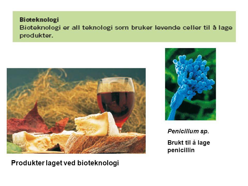 Hva er moderne bioteknologi.
