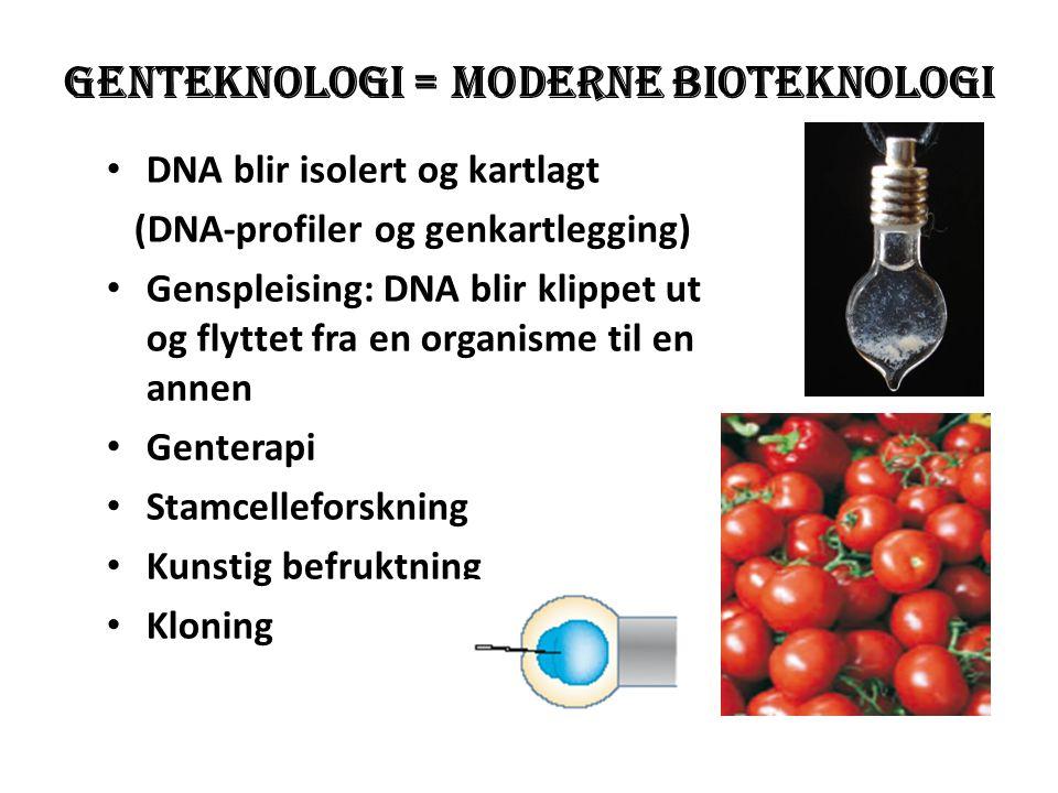 Genteknologi = moderne bioteknologi • DNA blir isolert og kartlagt (DNA-profiler og genkartlegging) • Genspleising: DNA blir klippet ut og flyttet fra