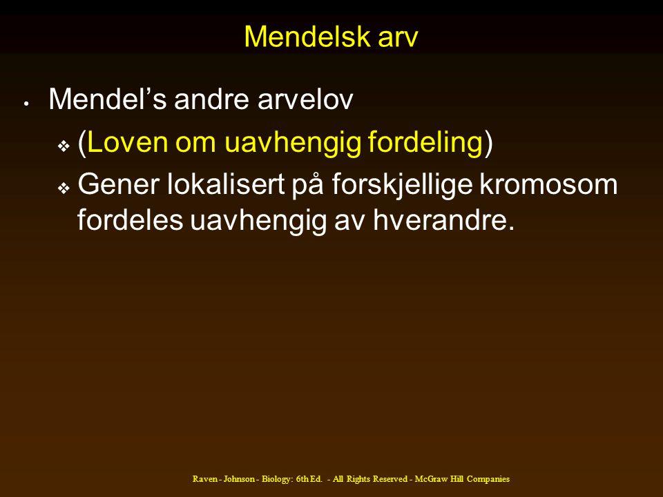 Mendelsk arv • Mendel's andre arvelov  (Loven om uavhengig fordeling)  Gener lokalisert på forskjellige kromosom fordeles uavhengig av hverandre.