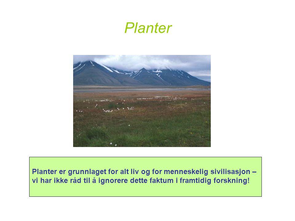 Planter Planter er grunnlaget for alt liv og for menneskelig sivilisasjon – vi har ikke råd til å ignorere dette faktum i framtidig forskning!
