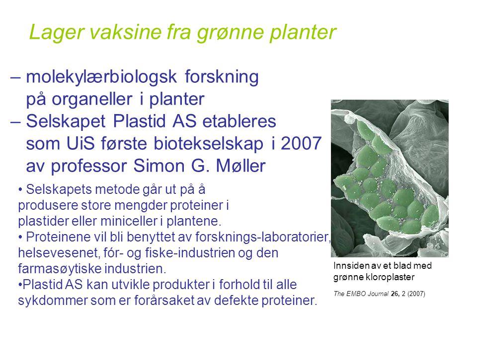 Lager vaksine fra grønne planter The EMBO Journal 26, 2 (2007) – molekylærbiologsk forskning på organeller i planter – Selskapet Plastid AS etableres som UiS første biotekselskap i 2007 av professor Simon G.