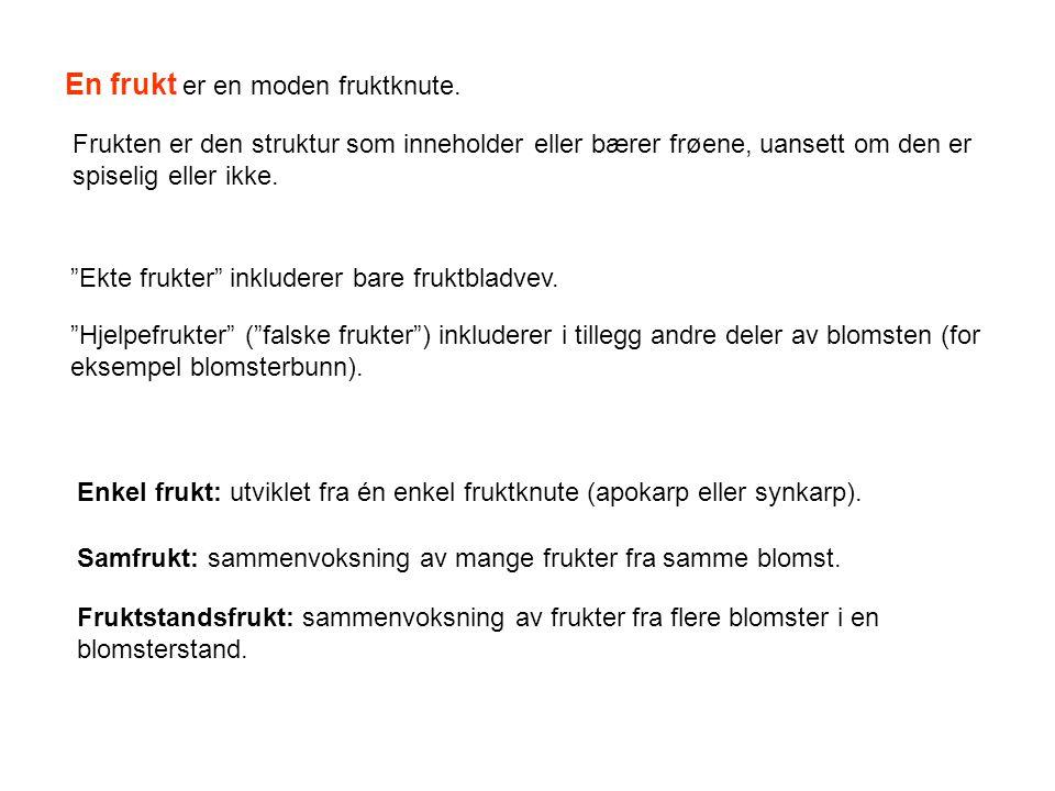 Kriterier for inndeling i ulike frukttyper: 1.om frukten sprekker opp eller ei 2.utforming av fruktveggen (kjøttfull/saftig eller tørr/hard) 3.antall fruktblad og frøemner