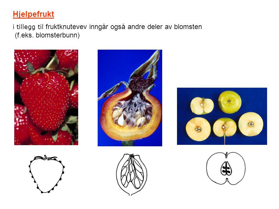 Hjelpefrukt i tillegg til fruktknutevev inngår også andre deler av blomsten (f.eks. blomsterbunn)