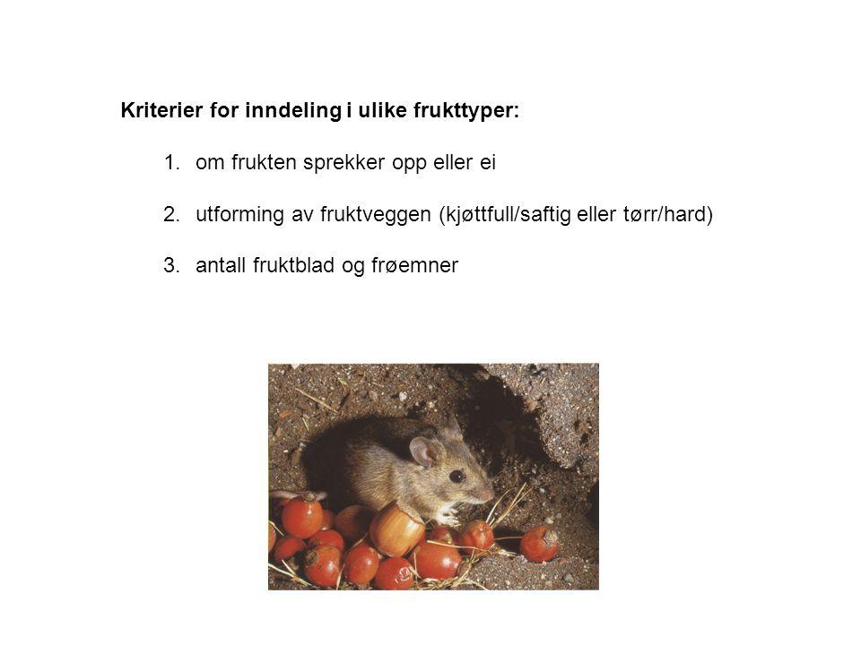 Kriterier for inndeling i ulike frukttyper: 1.om frukten sprekker opp eller ei 2.utforming av fruktveggen (kjøttfull/saftig eller tørr/hard) 3.antall