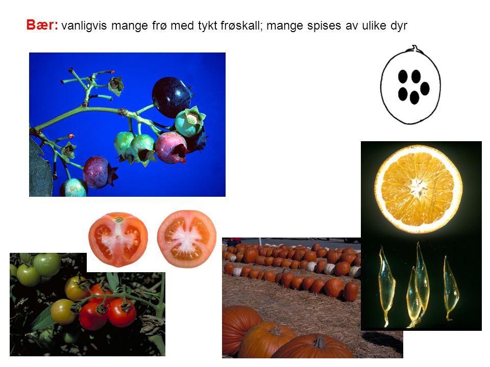 Bær: vanligvis mange frø med tykt frøskall; mange spises av ulike dyr